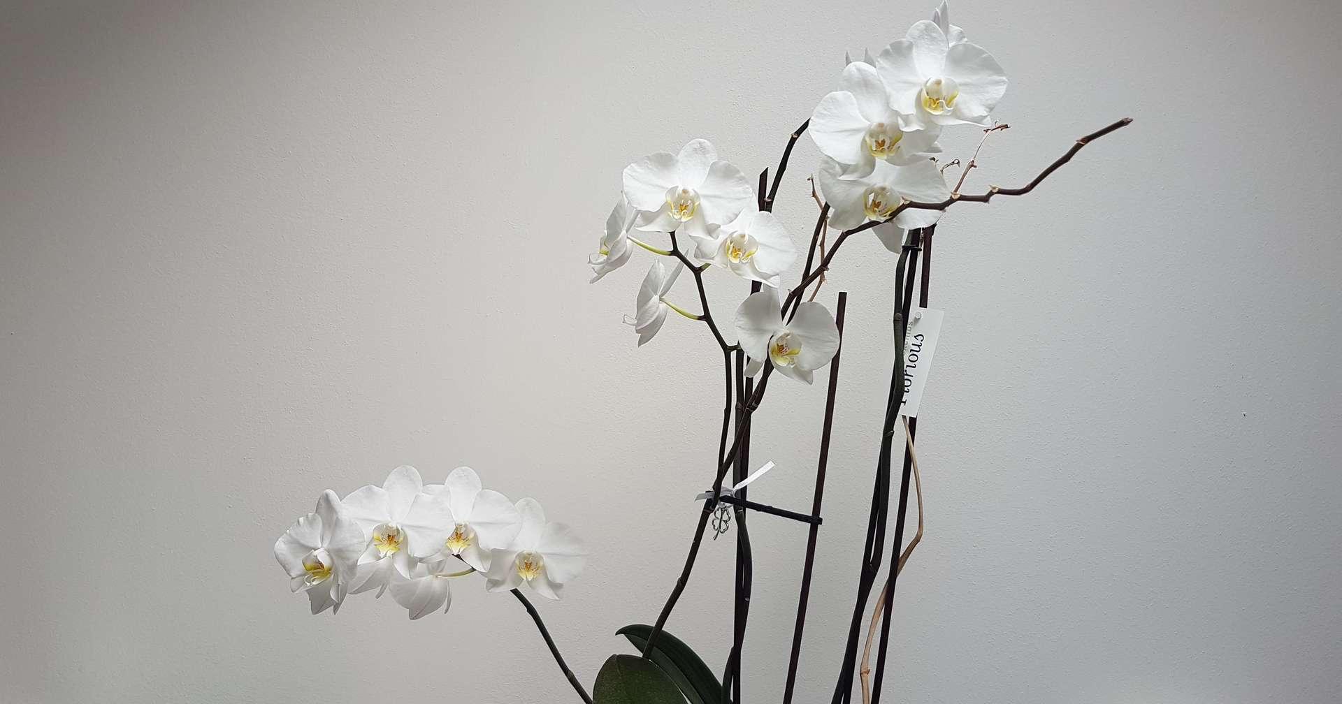 Orchidee Uffici E-Farm Ingegneria Padova